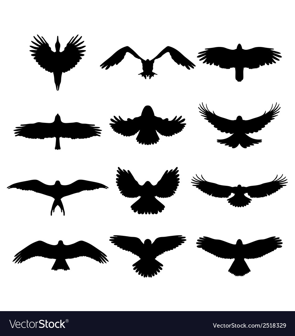 Birds in flight vector | Price: 1 Credit (USD $1)