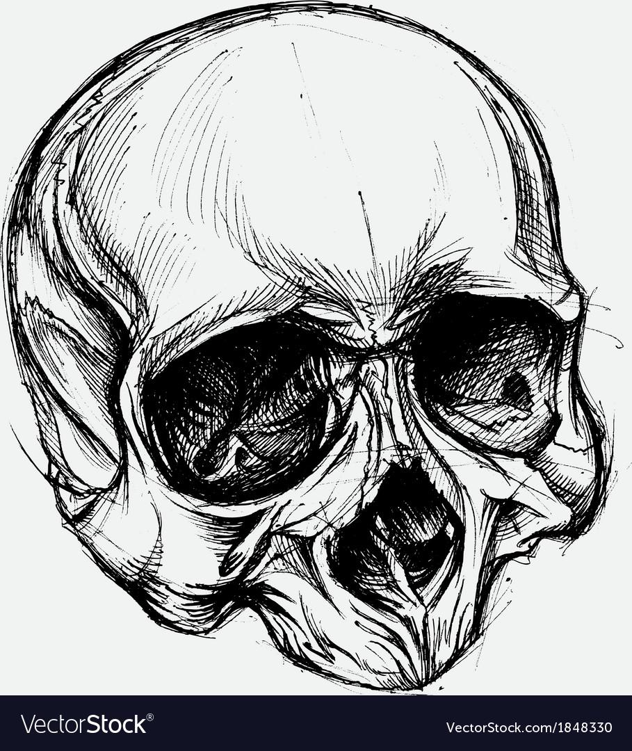 Skull drawing vector | Price: 1 Credit (USD $1)