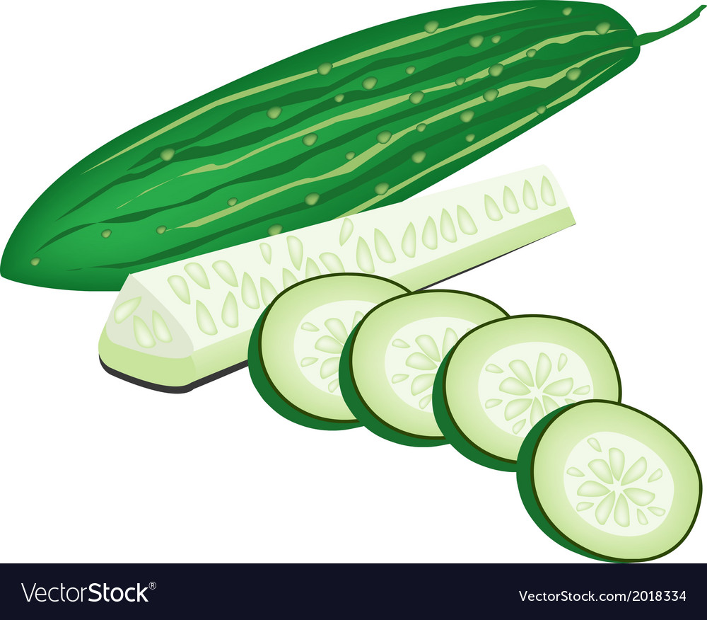 Delicious fresh marrow slices on white background vector | Price: 1 Credit (USD $1)