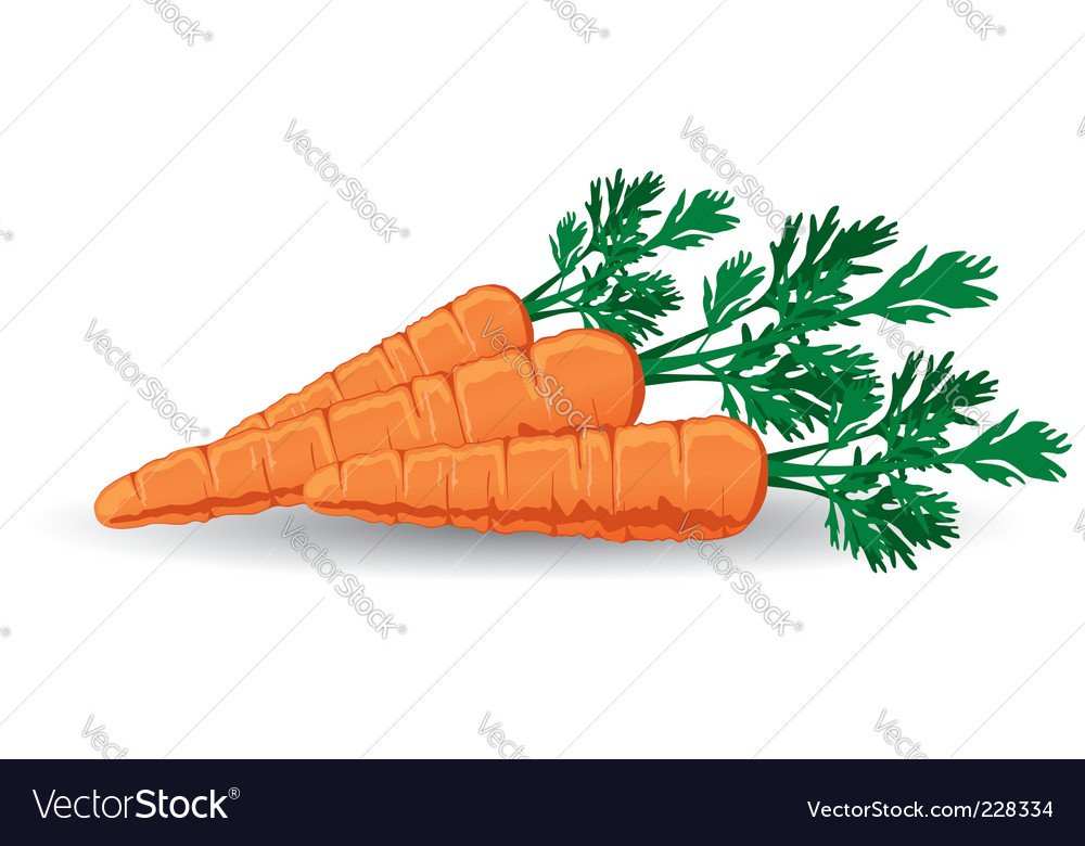 Fresh carrots vector | Price: 1 Credit (USD $1)