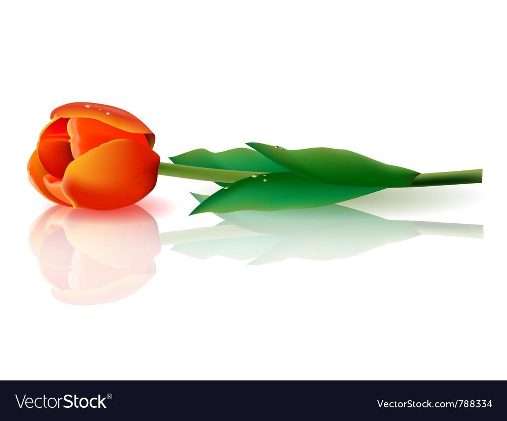 Tulip vector   Price: 1 Credit (USD $1)