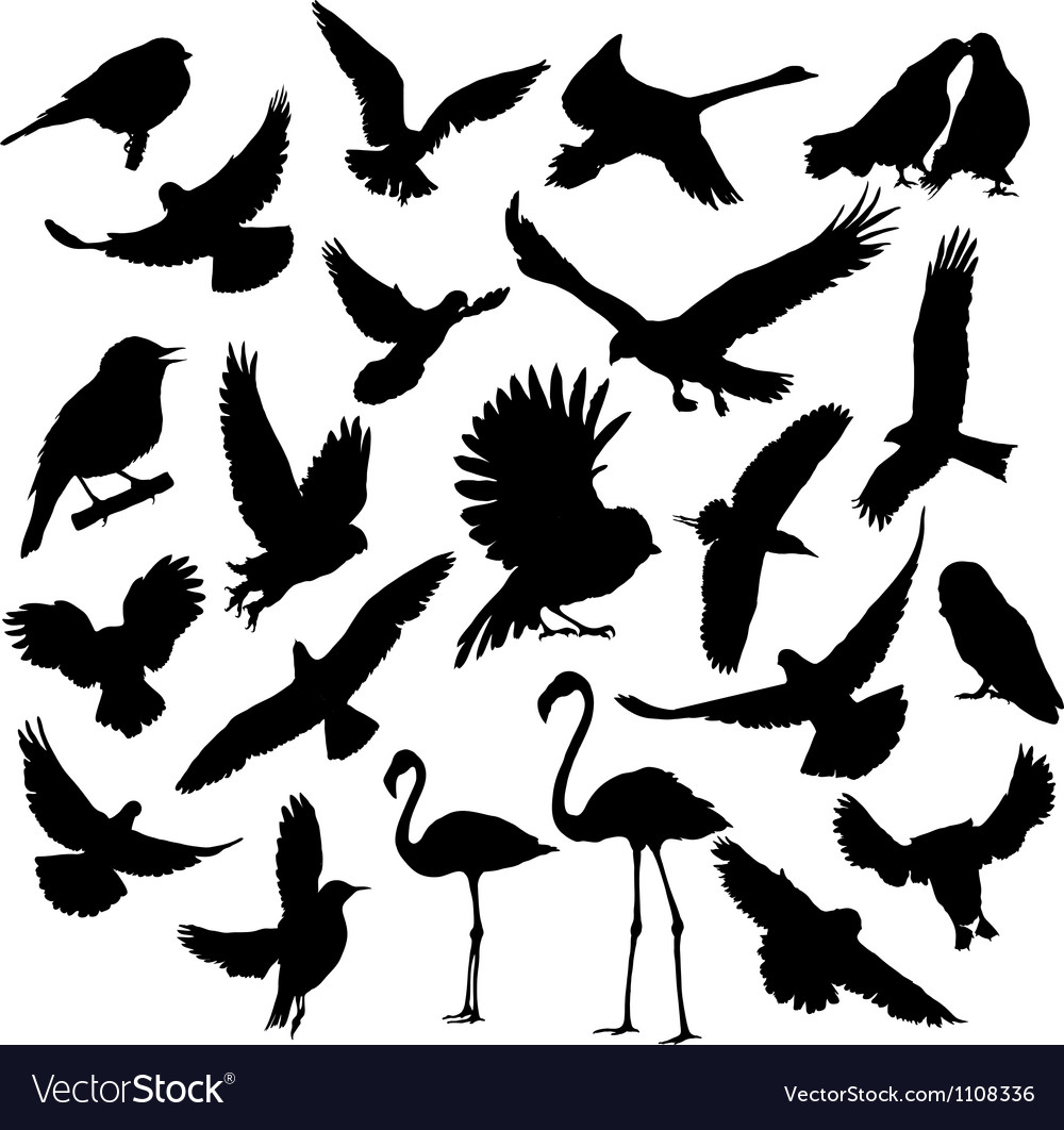 Set birds vector | Price: 1 Credit (USD $1)