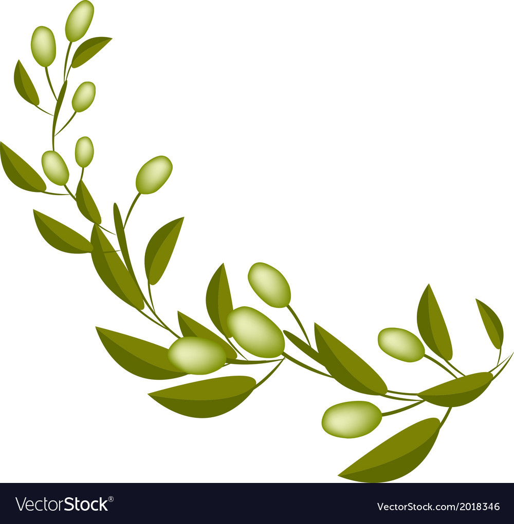 Fresh green olives on a branch on white background vector | Price: 1 Credit (USD $1)