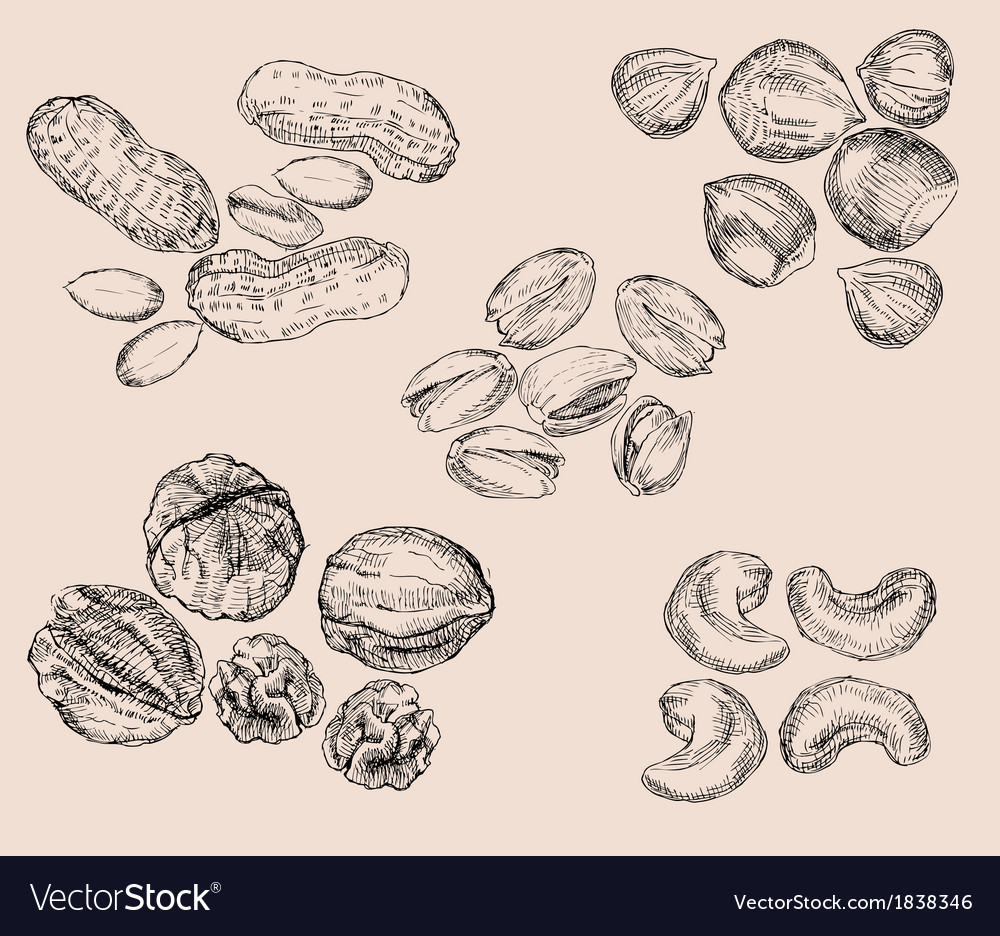 Hand drawn nuts vector | Price: 1 Credit (USD $1)