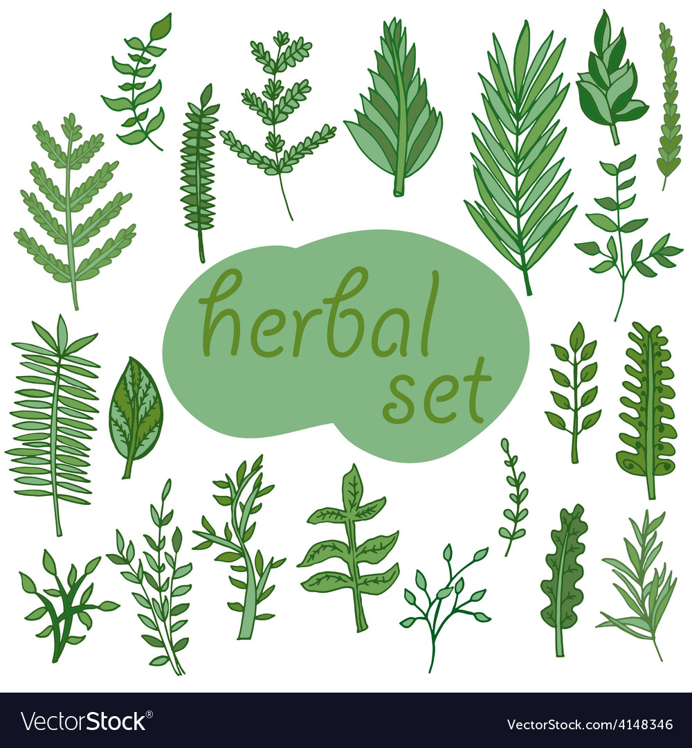 Herbal set hand drawn vector | Price: 1 Credit (USD $1)