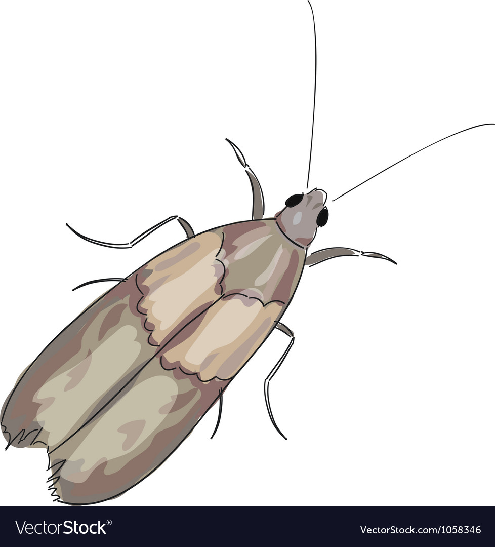 Moth on a white background vector   Price: 1 Credit (USD $1)