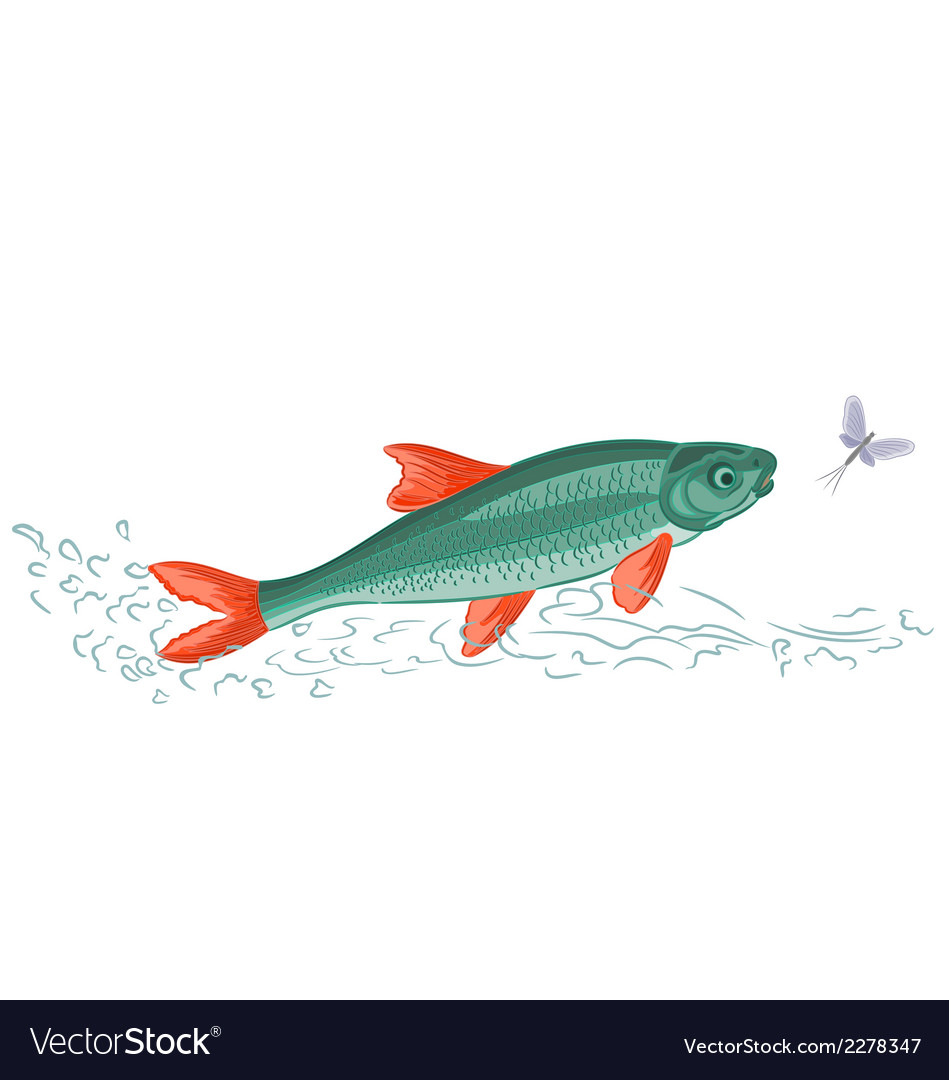 Fish-and-ephemera vector | Price: 1 Credit (USD $1)