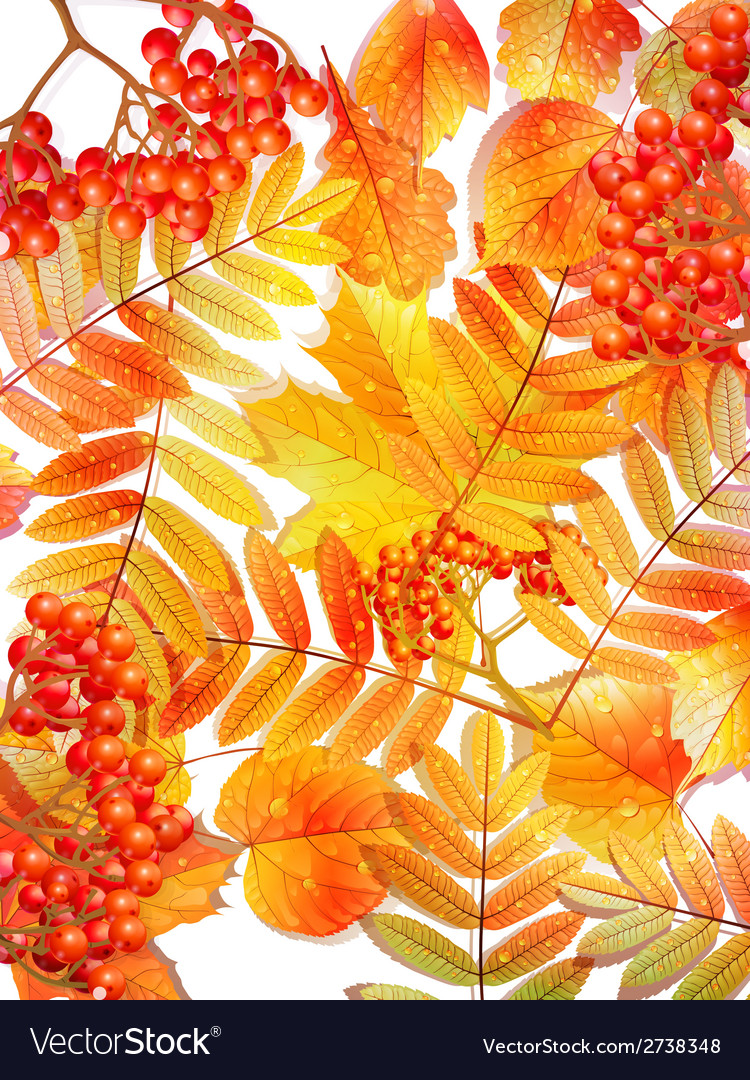 Group autumn multicilor leaves on white vector | Price: 1 Credit (USD $1)