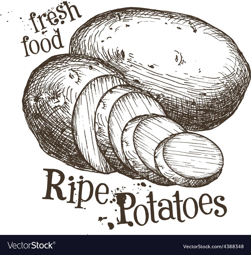 Ripe potatoes logo design template fresh vector | Price: 3 Credit (USD $3)