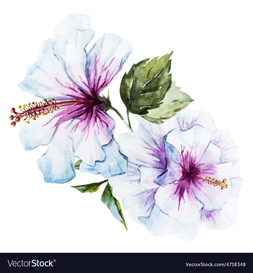 Watercolor hibiscus flower vector | Price: 1 Credit (USD $1)