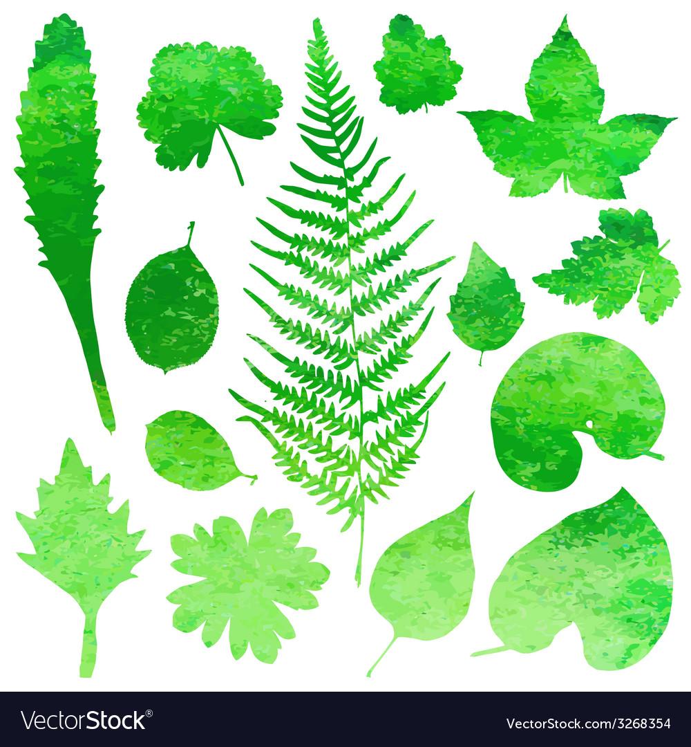 Set of garden watercolor leaves vector | Price: 1 Credit (USD $1)