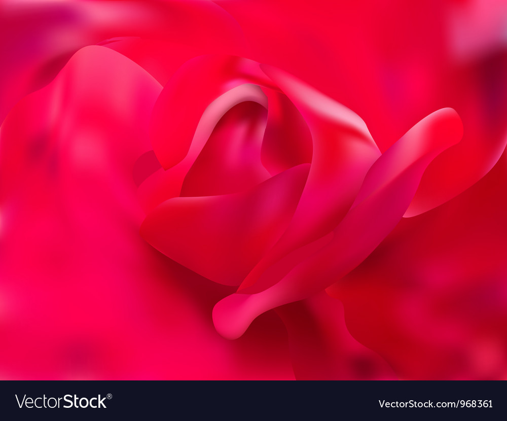 Rose close up vector | Price: 1 Credit (USD $1)