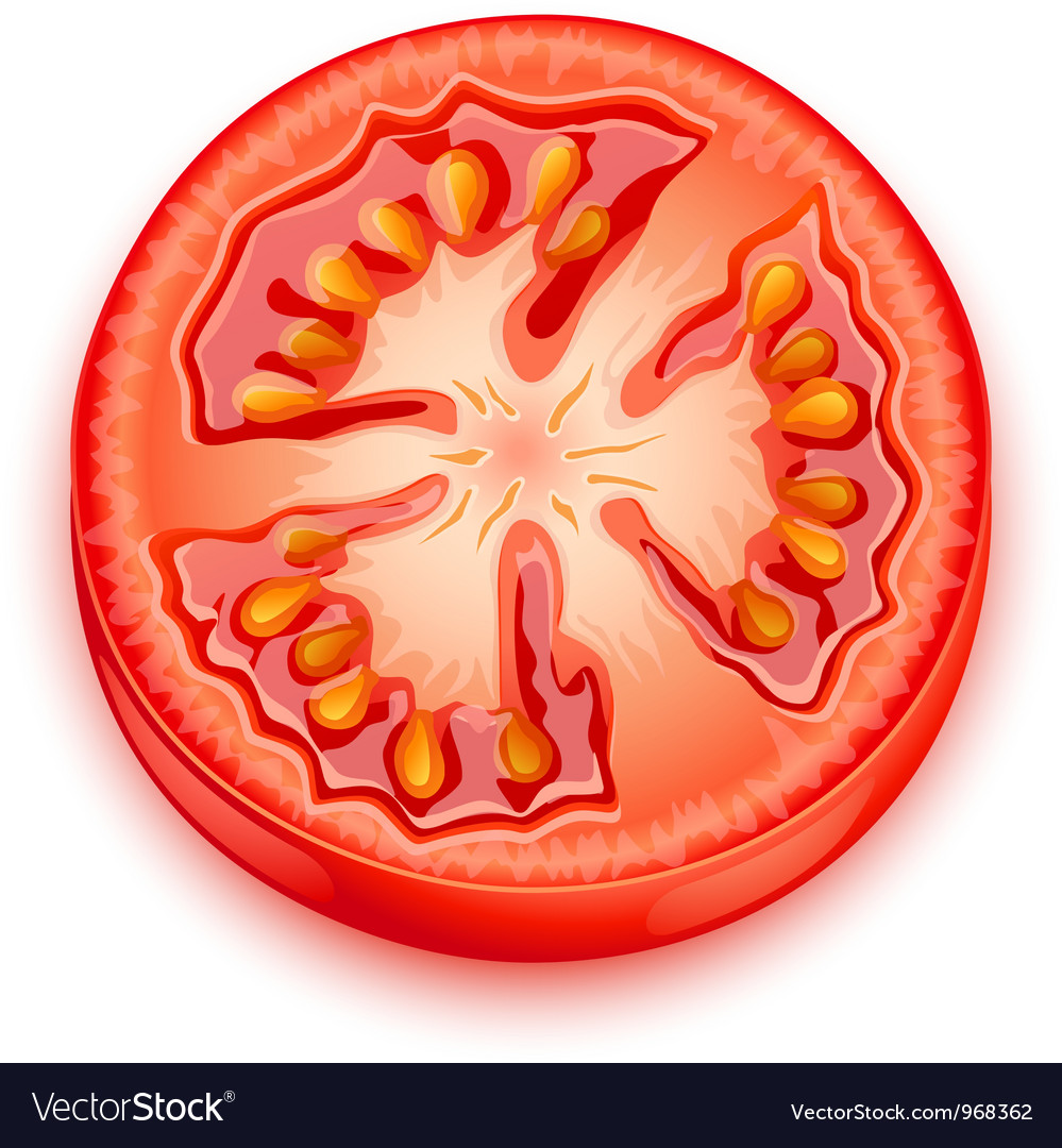 A slice of tomato vector | Price: 1 Credit (USD $1)