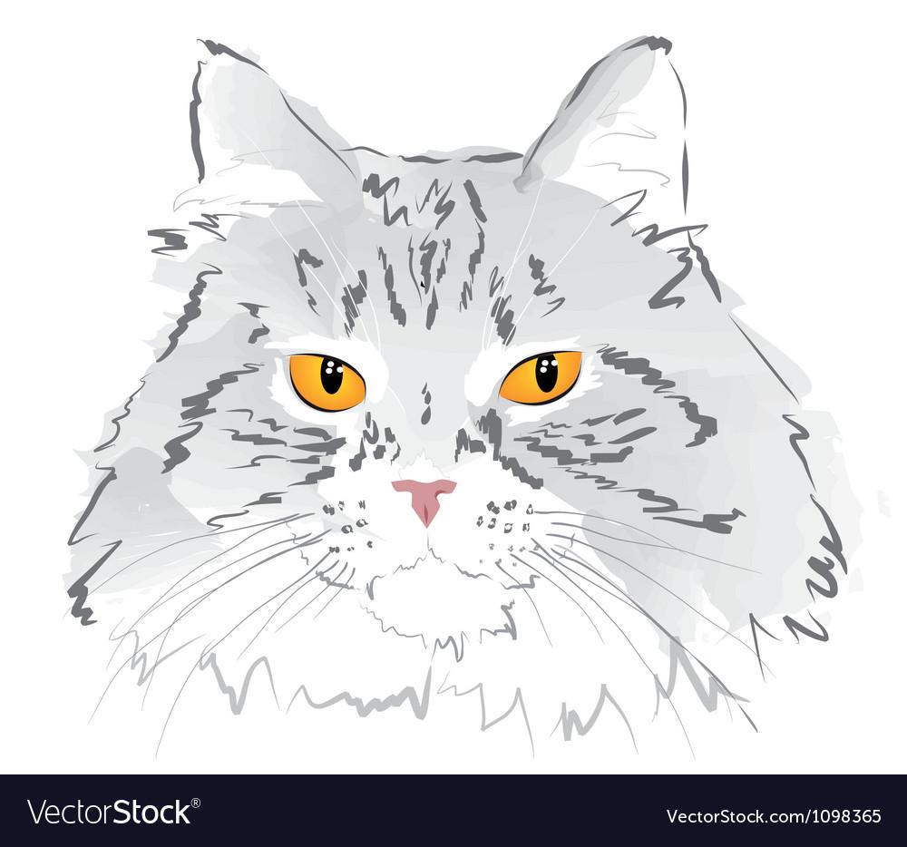 Muzzle gray cat vector | Price: 1 Credit (USD $1)