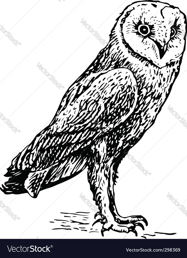 Owl tyro alba sketch vector | Price: 1 Credit (USD $1)