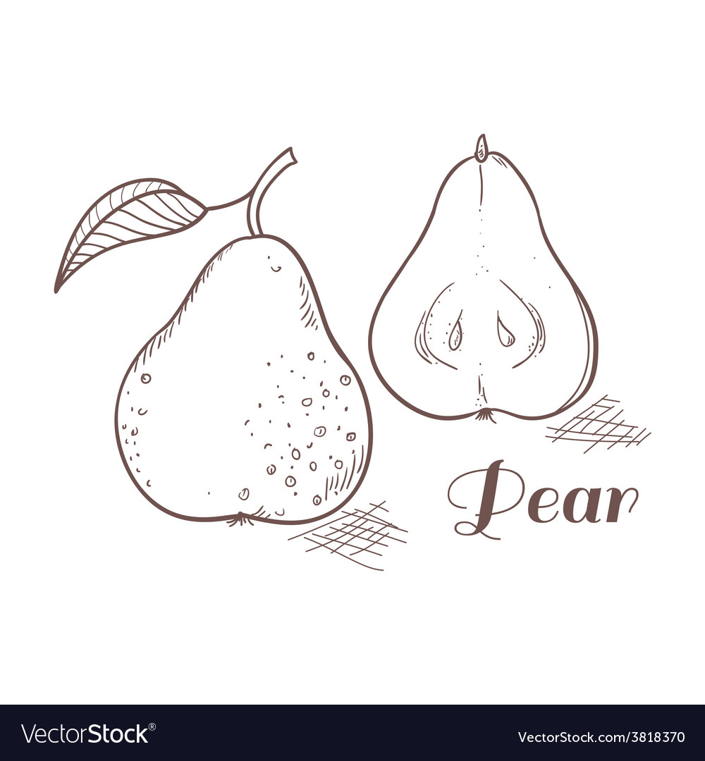 Engraving pear in vector | Price: 1 Credit (USD $1)