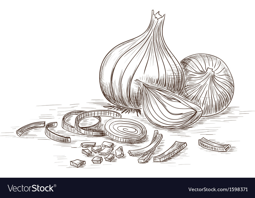 Hand drawn onions vector | Price: 1 Credit (USD $1)