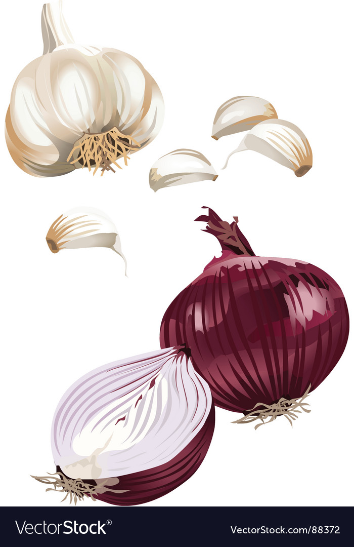 Onion garlic vector | Price: 1 Credit (USD $1)