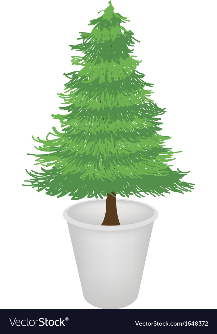 Pine tree in a flower pot vector | Price: 1 Credit (USD $1)