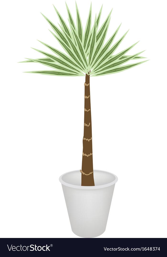 A palm treesin flower pot vector | Price: 1 Credit (USD $1)