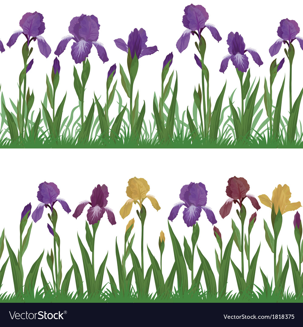 Flowers iris and grass set seamless vector | Price: 1 Credit (USD $1)