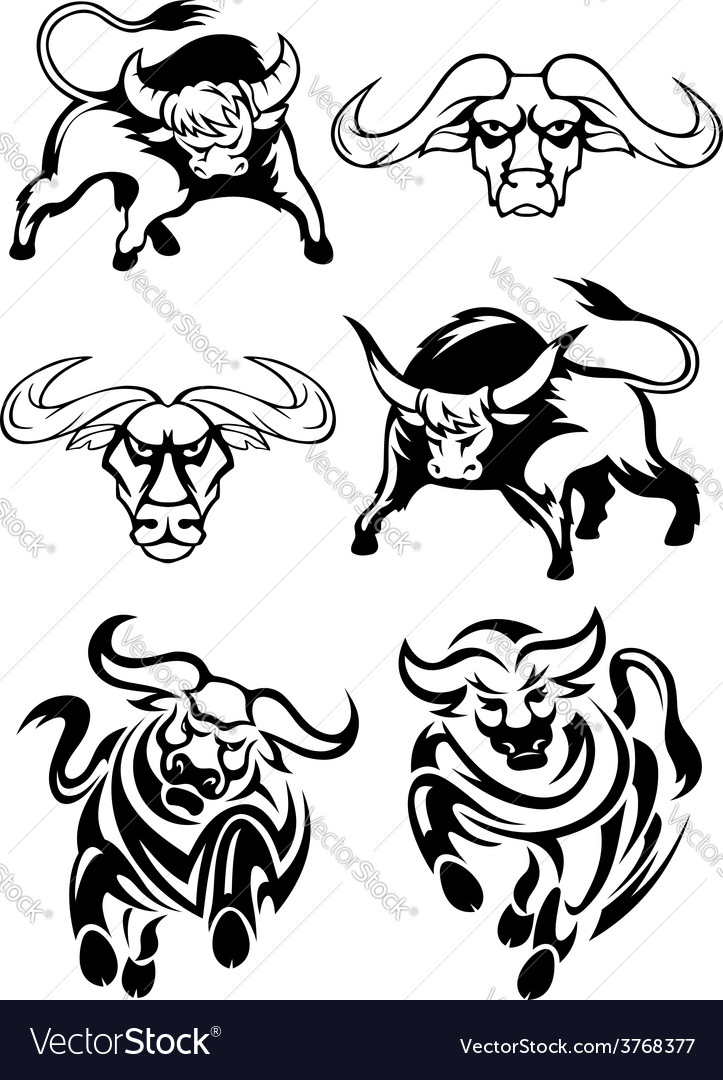 Black and white bulls or buffaloes vector | Price: 1 Credit (USD $1)