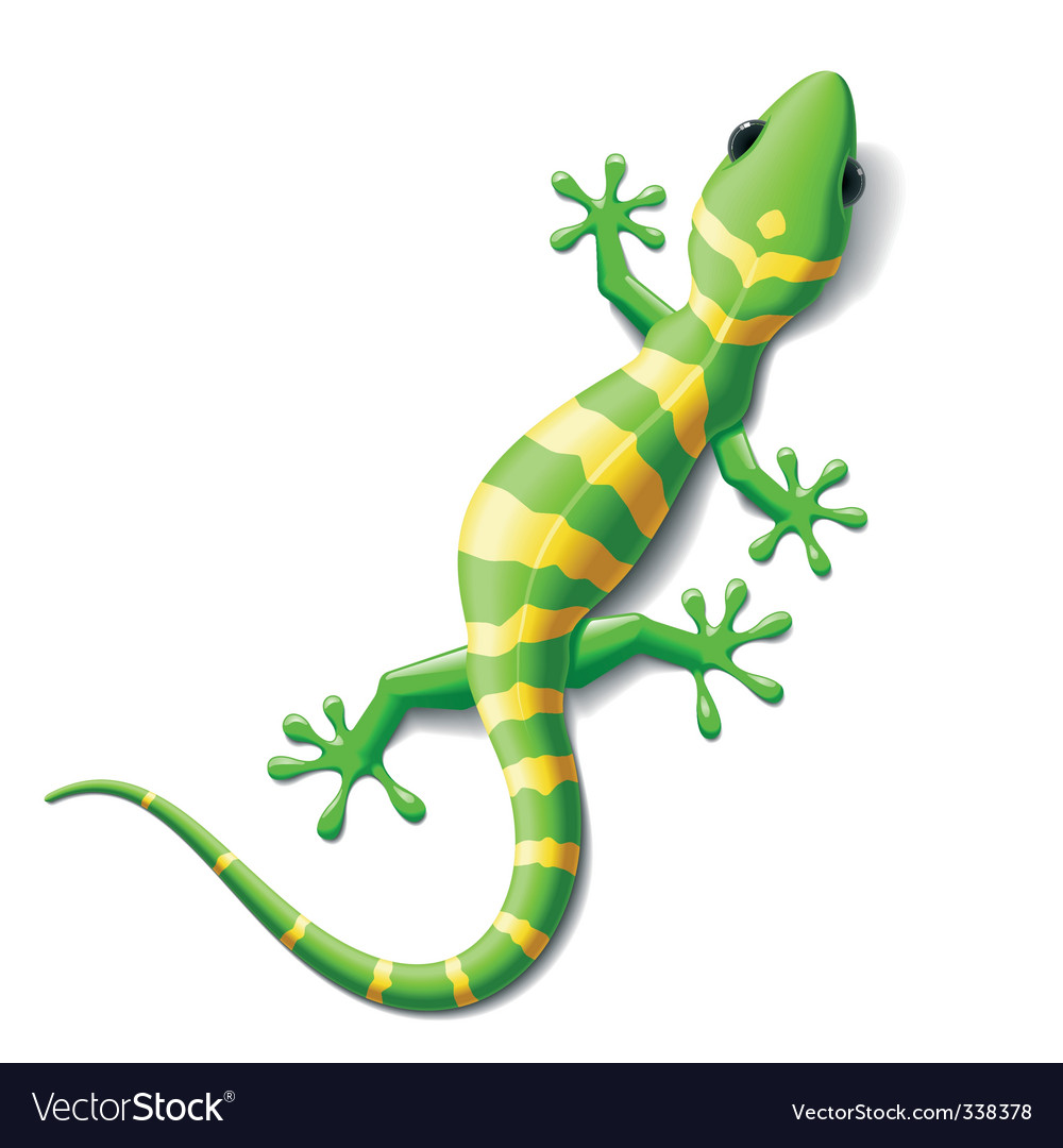Gecko vector | Price: 3 Credit (USD $3)