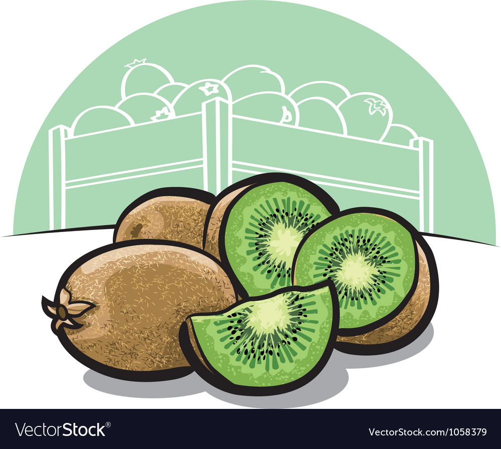 Kiwi fruit vector | Price: 3 Credit (USD $3)