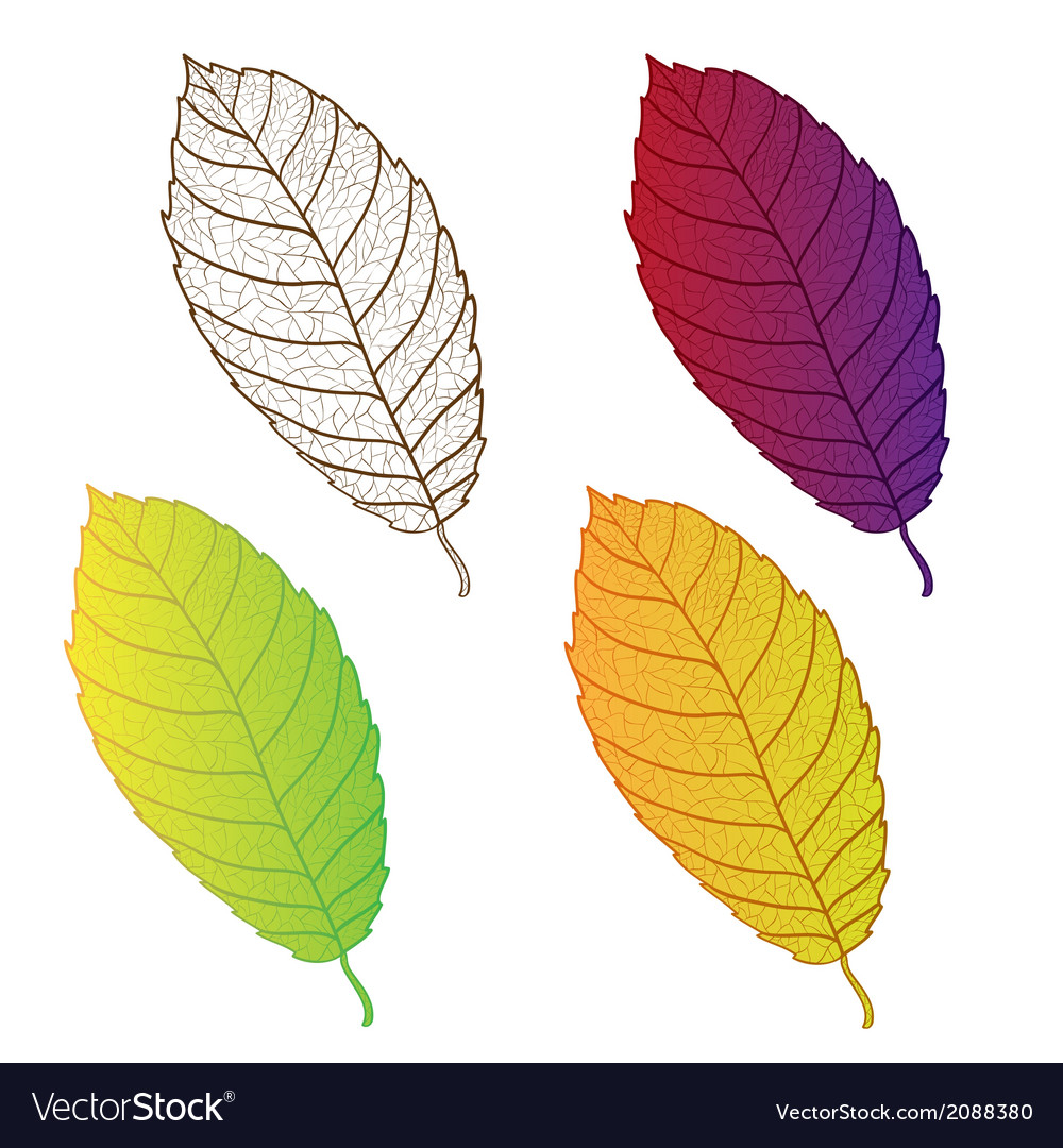 Collection colorful autumn leaves isolated vector | Price: 1 Credit (USD $1)