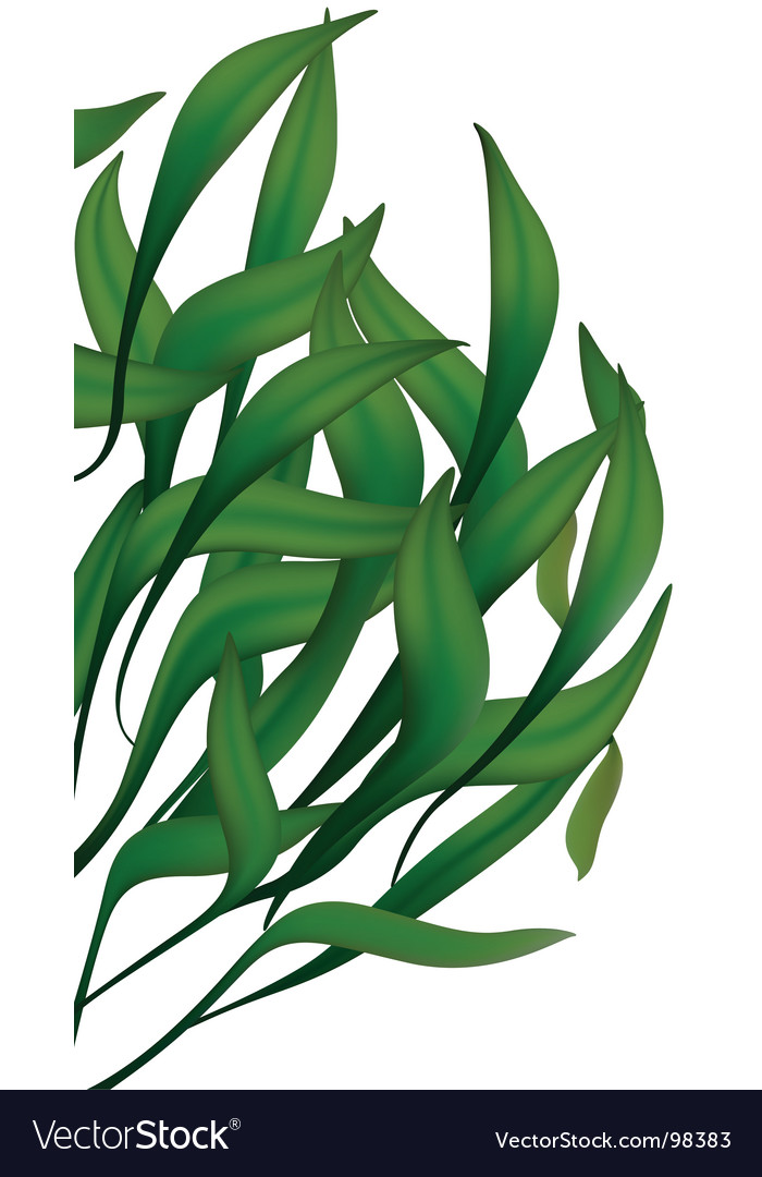 Green long leaves vector | Price: 1 Credit (USD $1)