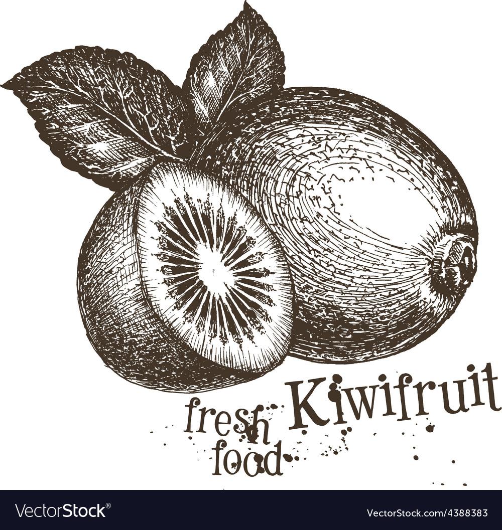 Kiwi logo design template fresh fruit vector | Price: 3 Credit (USD $3)