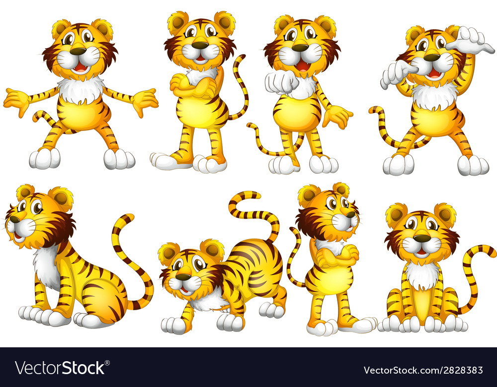 Tiger set vector | Price: 1 Credit (USD $1)