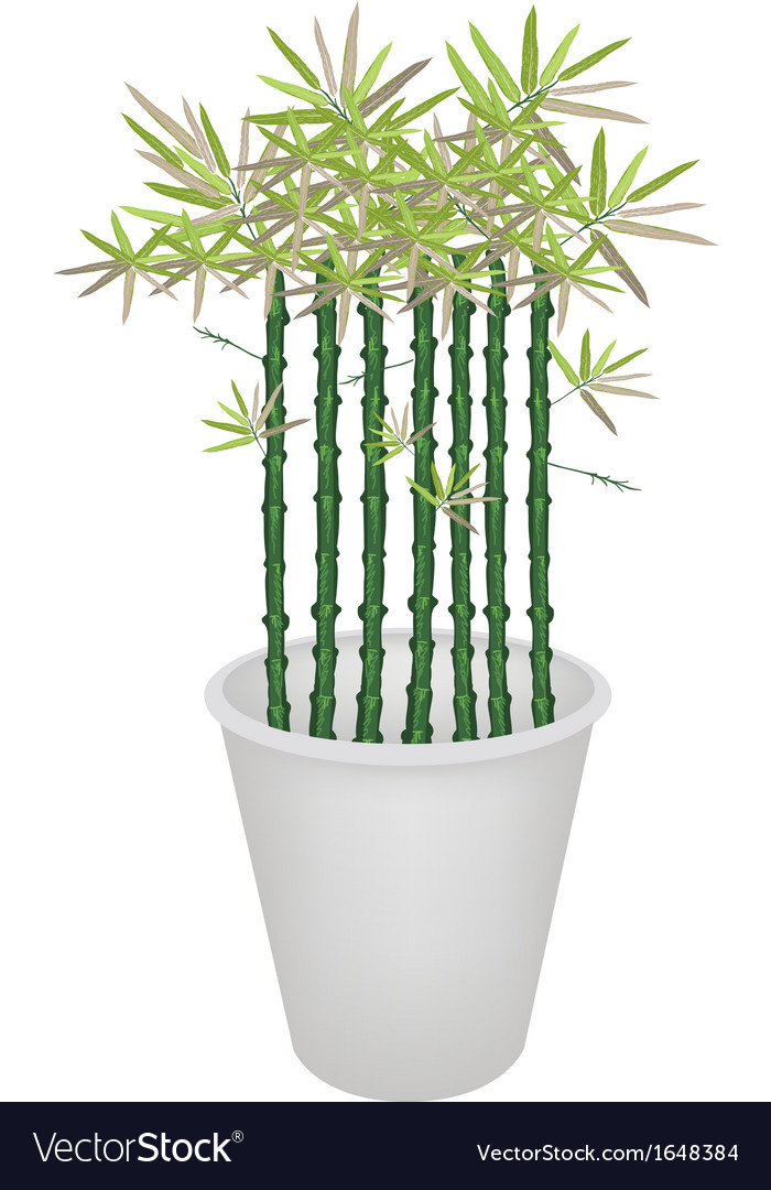 Green bammboo tree in a flower pot vector   Price: 1 Credit (USD $1)