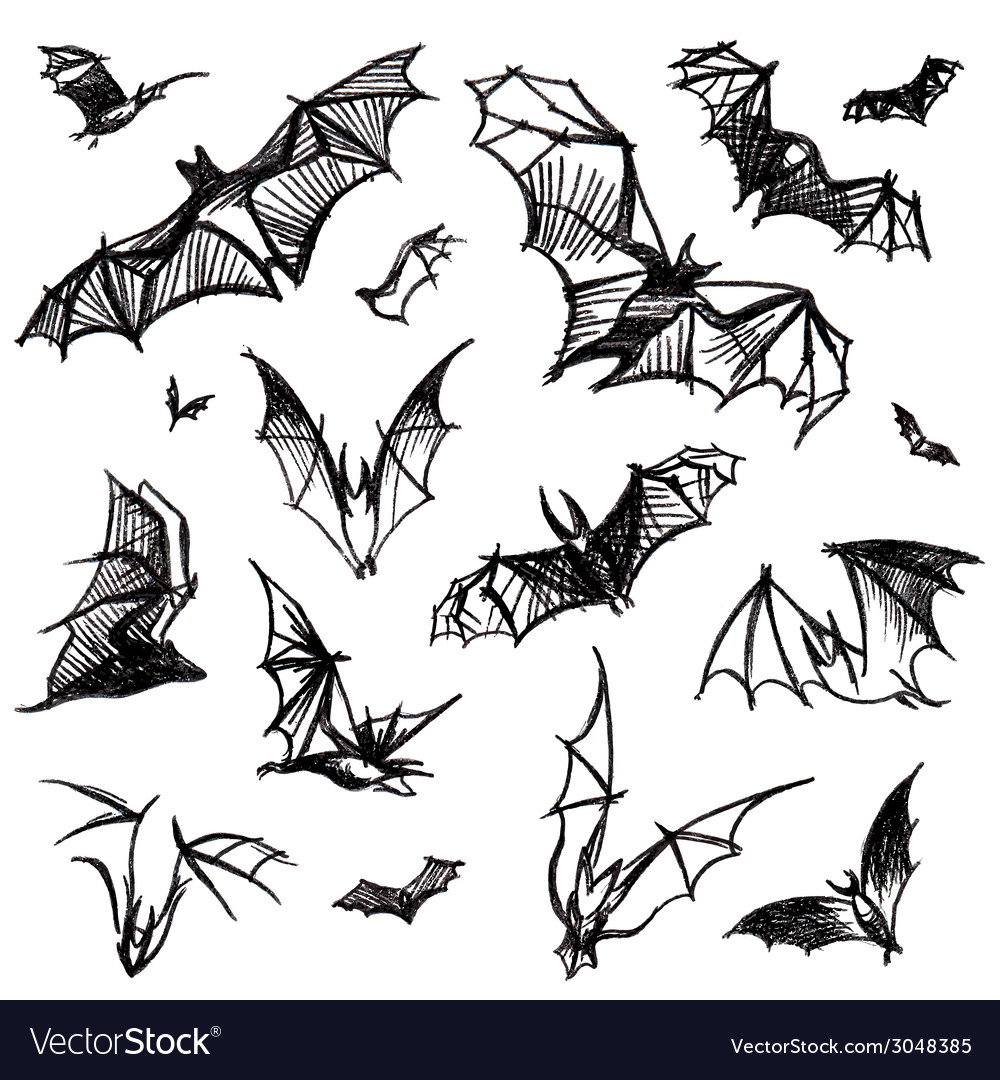 Set of isolated bats vector | Price: 1 Credit (USD $1)