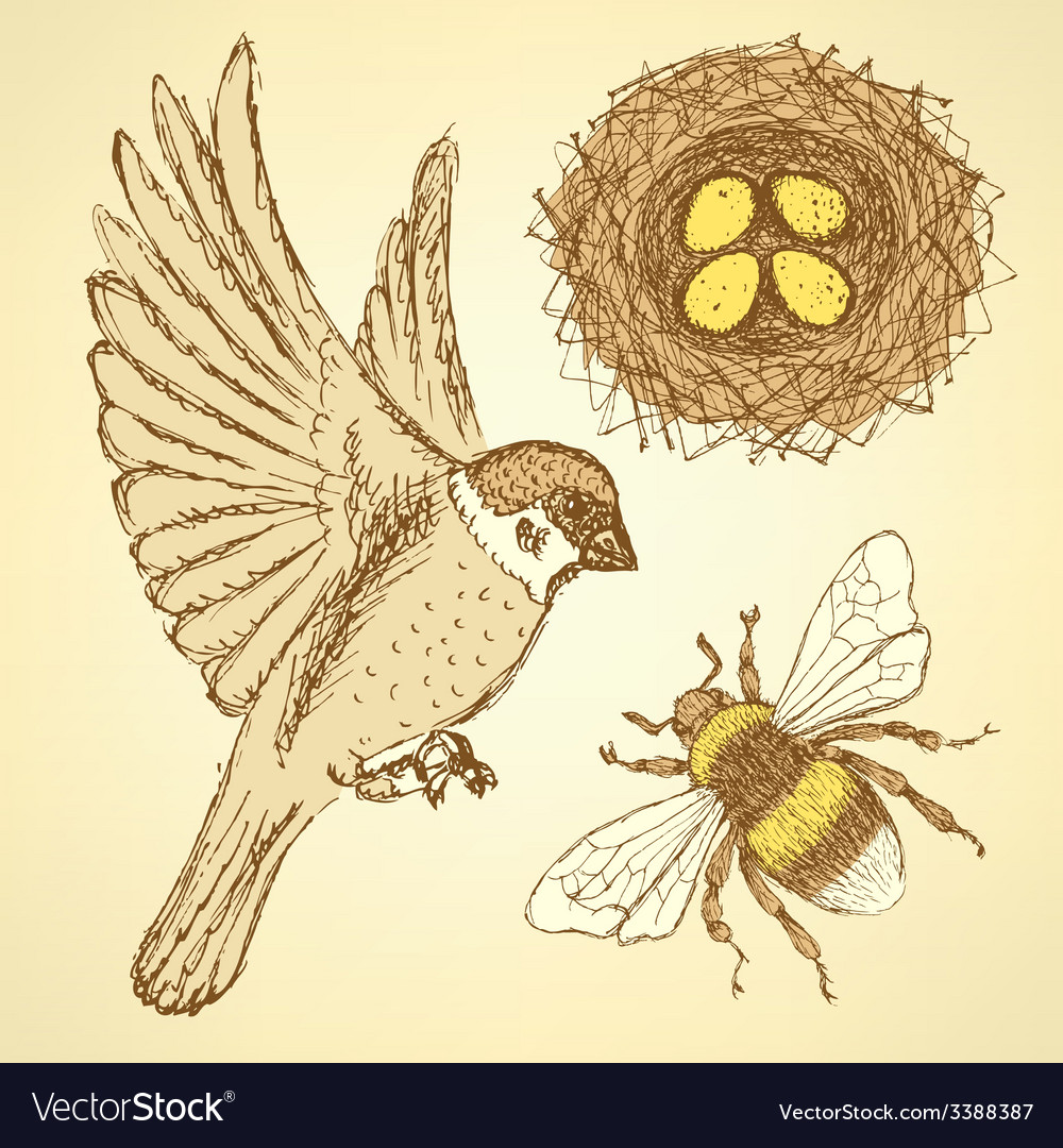 Sketch set with sparrow bee and nest in vintage vector | Price: 1 Credit (USD $1)