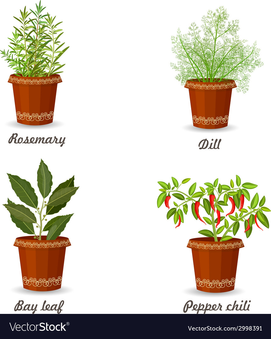Collection of herbs in a flowerpots vector | Price: 1 Credit (USD $1)