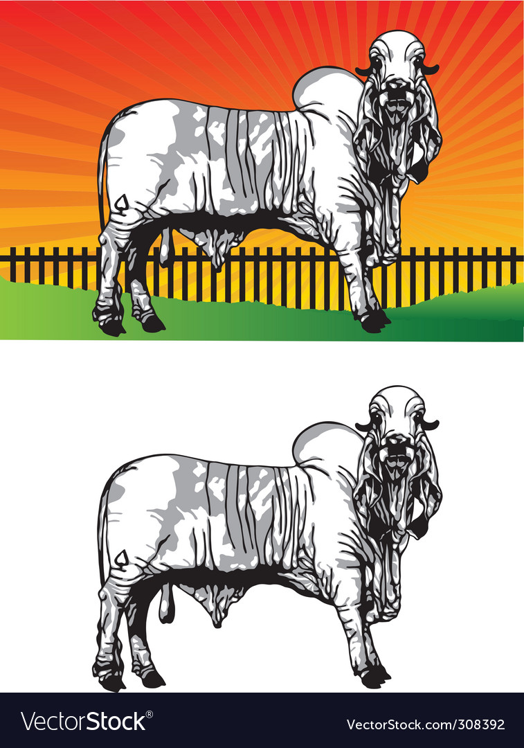Ox pasture vector | Price: 1 Credit (USD $1)