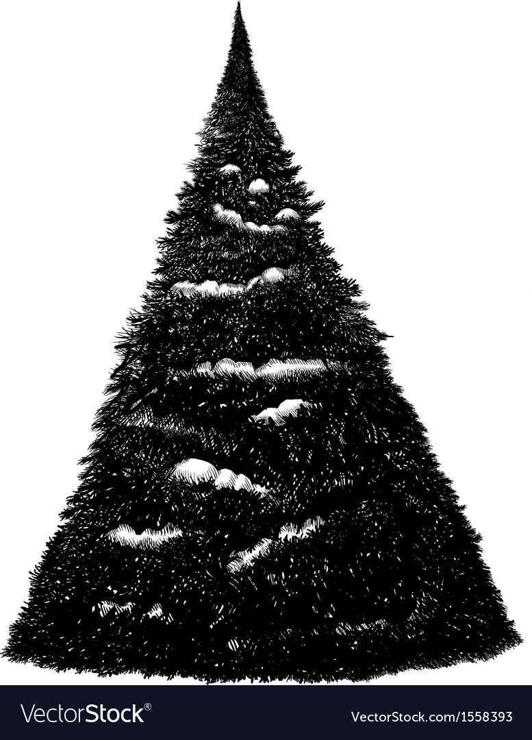 Black and white hand drawn on tablet fir tree vector | Price: 1 Credit (USD $1)
