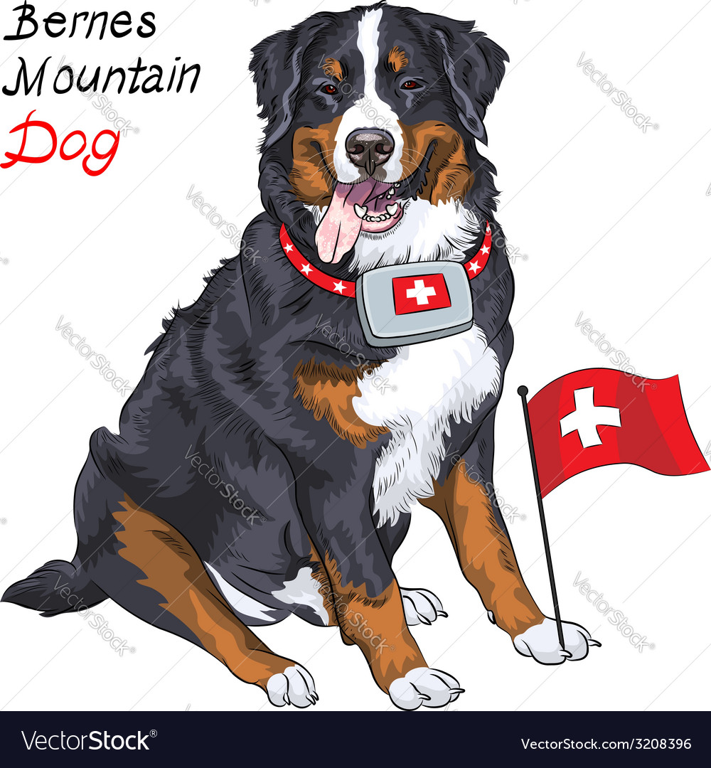Happy bernese mountain dog with a first aid kit vector | Price: 1 Credit (USD $1)