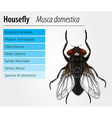 Common housefly vector