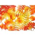 Group autumn multicilor leaves on white vector