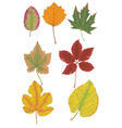 Autumn colored leaves vector