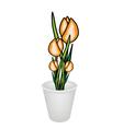 Beautiful yellow tulip flowers in a flowerpot vector