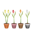 Fresh tulip flowers in four ceramic pots vector