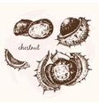 Chestnuts vector