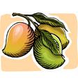 Mangoes vector