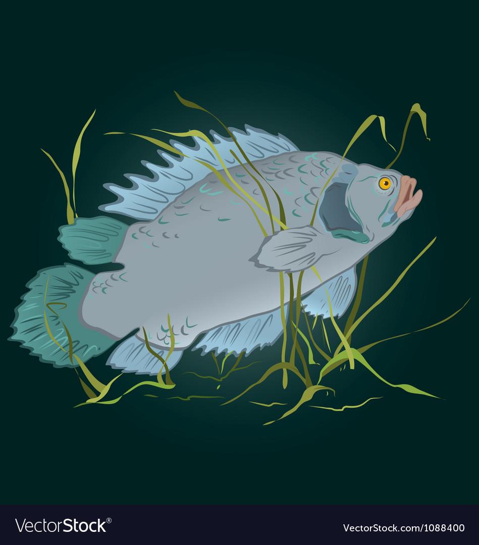 Fish in seaweed vector | Price: 1 Credit (USD $1)