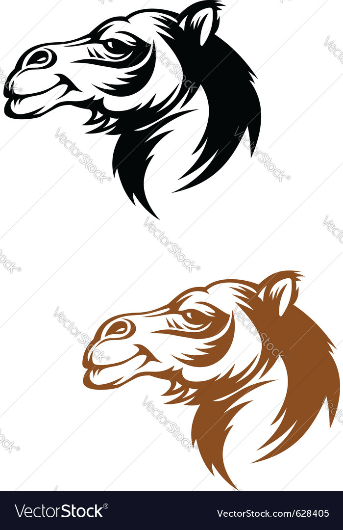 Camel head vector | Price: 1 Credit (USD $1)