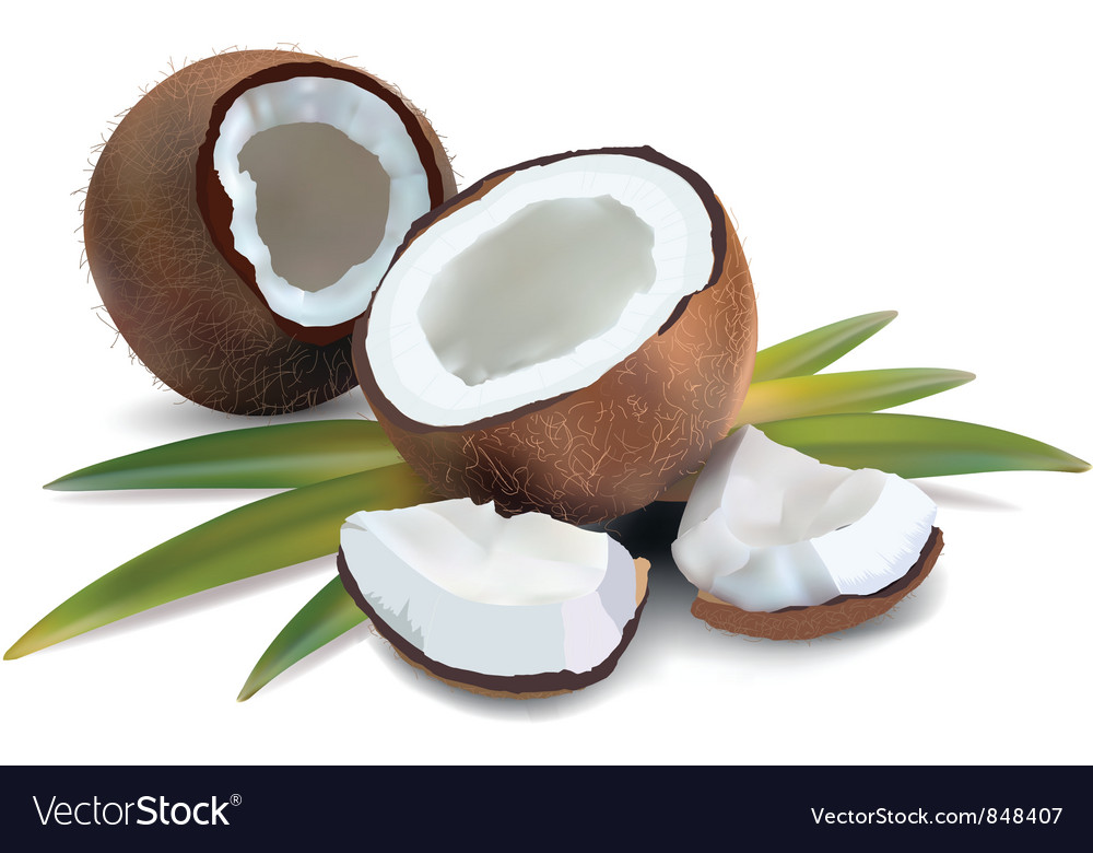 Coconut tropical vector | Price: 3 Credit (USD $3)