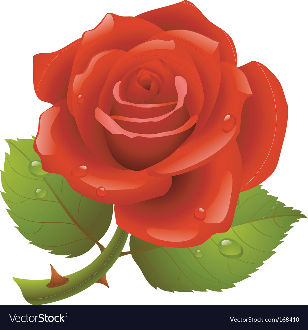 Red rose vector | Price: 3 Credit (USD $3)